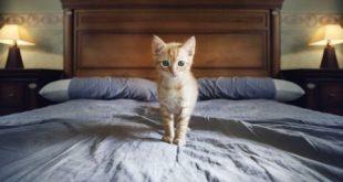 cara membersihkan kasur yang terkena kencing kucing